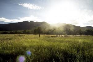 grassy-field-1031578_640