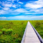 湿原の一本道