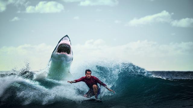 鮫に追われるサーファー